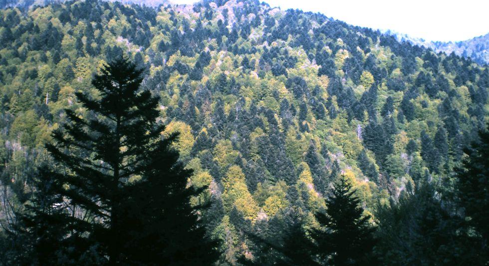 Bosque de coníferas (verde oscuro) y árboles caducos (verde claro) en Alsacia (Francia).