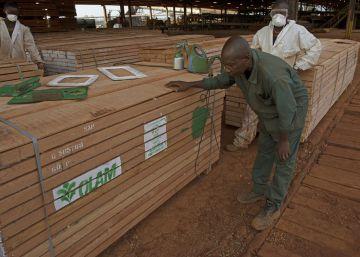 La gestión de los bosques en Europa está empeorando el cambio climático