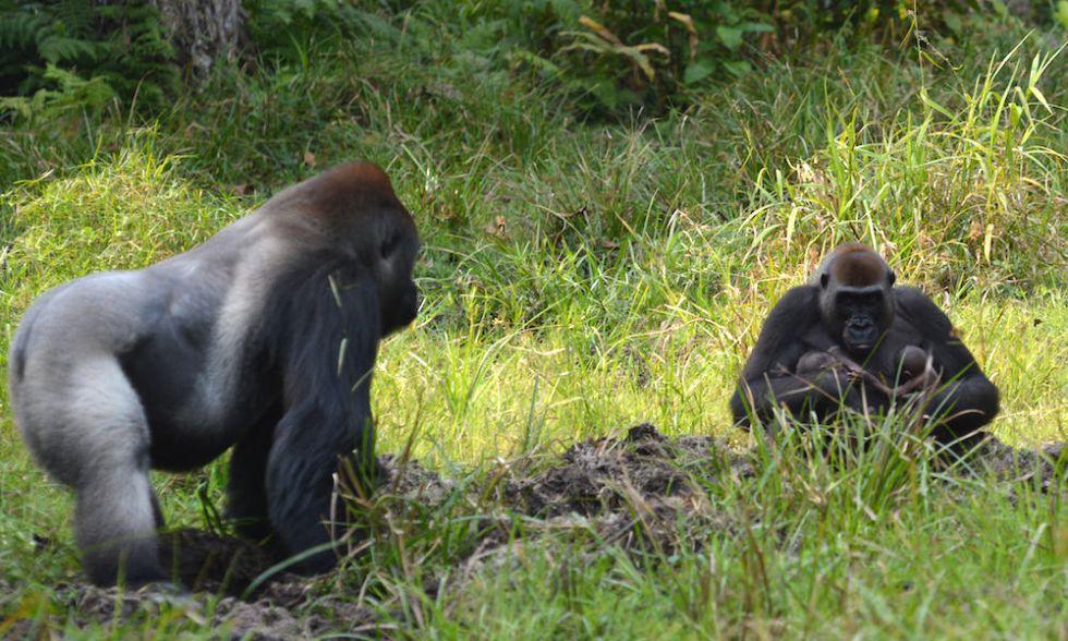 Malui, la madre, cuida de los pequeños ante la atenta mirada del padre, Makumba.
