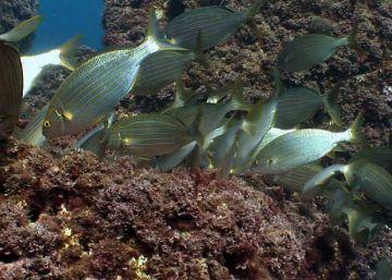 La destrucción de las praderas submarinas
