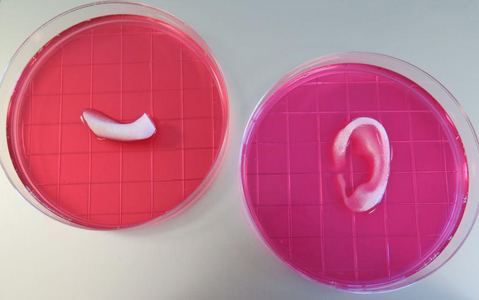 Porción de una mandíbula y oreja impresas con el sistema ITOP