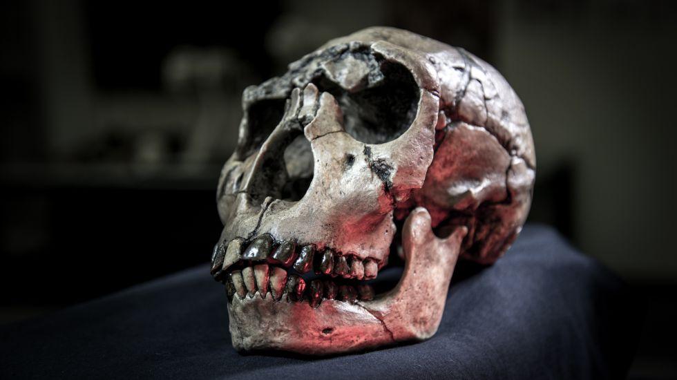 Imagen de la calavera de un 'Homo ergaster' de kenia, incluido en el estudio.