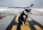 Un perro para vigilar el aeropuerto