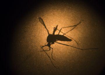 Lucha ciudadana contra los mosquitos del zika, dengue y chikungunya