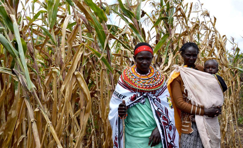 Mujeres de la cooperativa inspeccionan el campo de maíz.