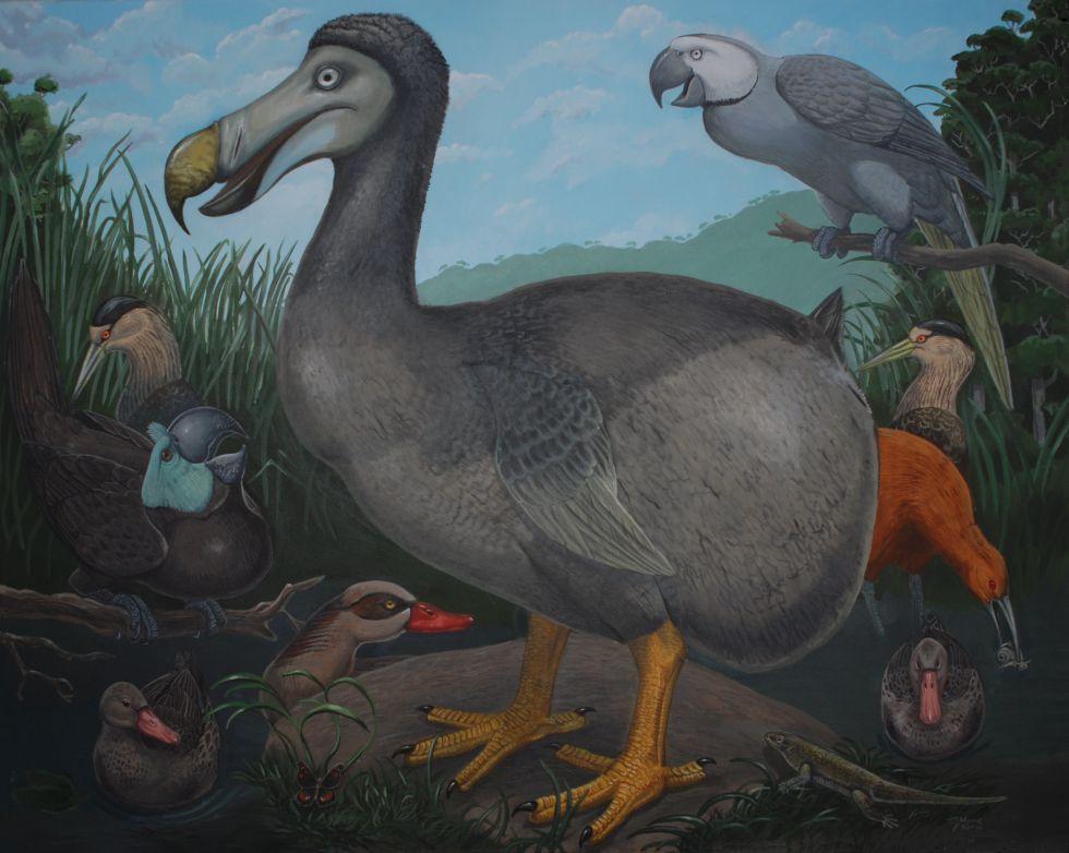 Una interpretación moderna del dodo, realizada por el paleontólogo Julian Hume.