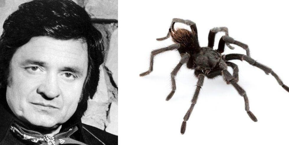 Johnny Cash y la especie denominada Aphonopelma johnnycashi.