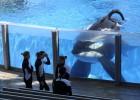SeaWorld anuncia el final de la reproducción de orcas cautivas