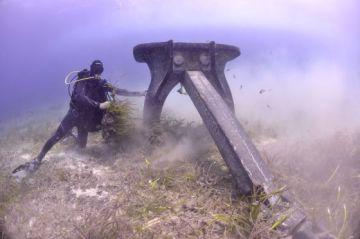 Un submarinista comprueba los daños causados por un ancla en posidonias de Ses Salines en Baleares.