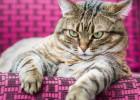 Nadie entiende a un gato gordo (ni siquiera su dueño)