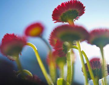 Equinoccio primaveral: y llegó la primavera
