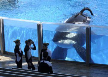 SeaWorld anuncia el final de la reproducción de orcas en cautividad