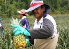 Costa Rica camina hacia un modelo agrícola de desarrollo sostenible