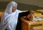 Sembrar seguridad alimentaria para poder cosechar paz