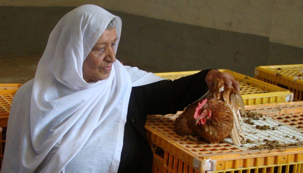 Una mujer inspecciona una de las 20 gallinas ponedoras que ha recibido dentro de un plan para asistir a hogares afectados por el conflicto en Qatana, cerca de Damasco (Siria).