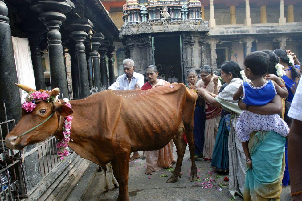 Una vaca paseando por una calle en India.