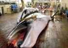 ¿Por qué Japón sigue cazando ballenas?
