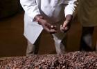 Vivir del cacao