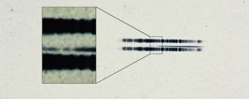 Espectro de la estrella de van Maanen que indica que a su alrededor orbitan planetas