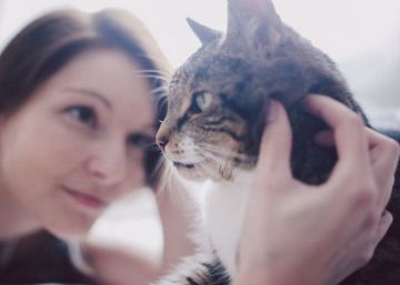 Estoy embarazada y tengo gato en casa, ¿debo preocuparme?