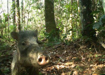 Los animales del Amazonas también se hacen selfis