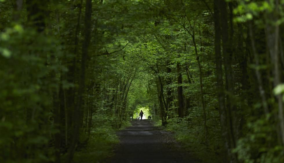 Vegetació d'un bosc europeu.
