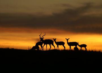 El cambio climático se ceba con las especies ya más amenazadas