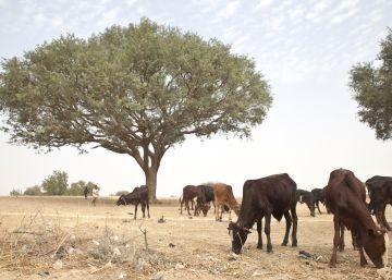 Una dura lucha contra el desierto