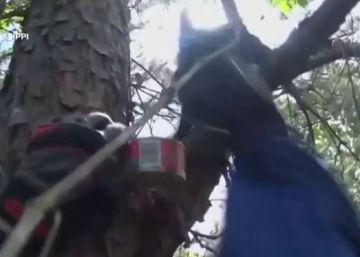 Un gato es rescatado después de pasar 11 días arriba de un árbol