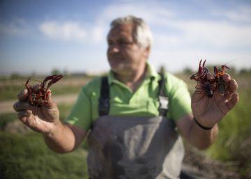 Lo que une al cangrejo rojo con la trucha