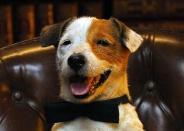 Muere 'Pancho', el perro de la tele