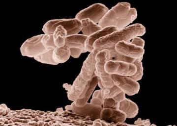 Nossa nuvem pessoal de bactérias