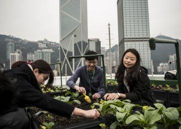 Cultivando en las nubes