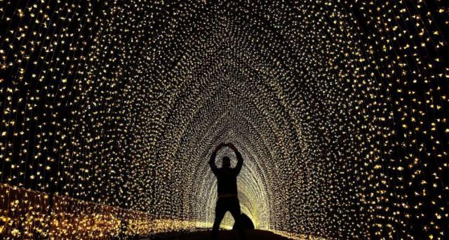 Un hombre toma una foto dentro de la 'catedral de la luz' en el Real Jardín Botánico en Sídney, Australia.