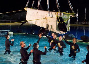 La orca 'Morgan' está sorda