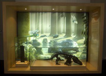41 nuevos fósiles en el Museo Nacional de Ciencias Naturales
