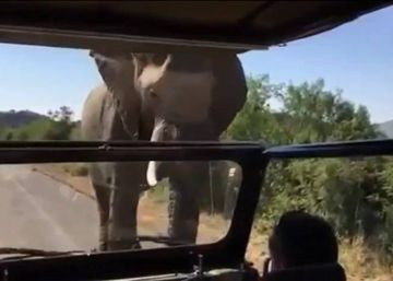Arnold Schwarzenegger asediado por un elefante