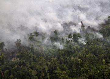Las emisiones de CO<sub>2</sub> por incendios forestales y quema de biomasa subieron un 12% en 2015