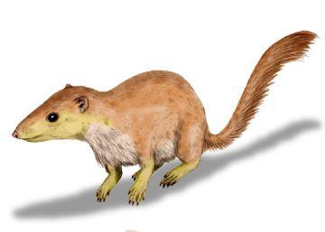 Los mamíferos empezaron su ascenso antes de la caída de los dinosaurios