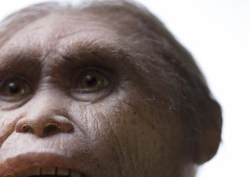 Descubren a los ancestros del 'hobbit' en la isla de Flores