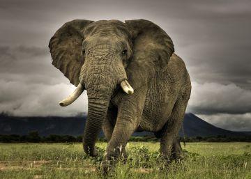 ¿Cuáles son los países más peligrosos para los animales?