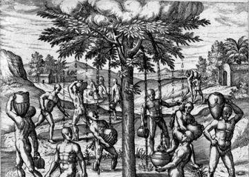 Colón también descubrió el cambio climático