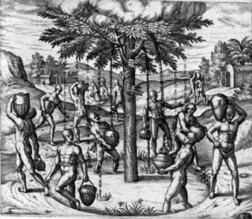El árbol santo en 'Peregrinationes' de Théodore de Bry (1593)