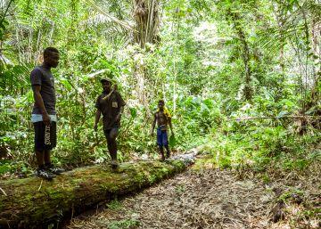 La reserva de la biosfera del Dja se muere