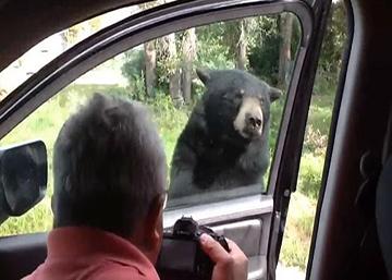 Un oso abre un coche y aterroriza a una familia en EE UU