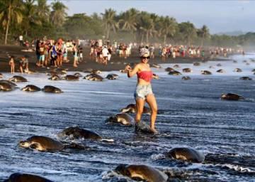 Turistas caminando entre tortugas en Costa Rica.