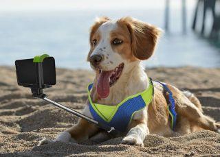 Cinco 'apps' para hacerte feliz a ti y tu mascota