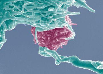 El 'cortapega' genético llega a los humanos
