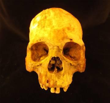 Uno de los cráneos de los que se ha extraído ADN
