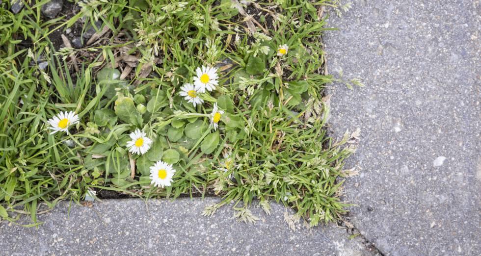 Los operarios municipales tienen instrucciones para no terminar con las malas hierbas.